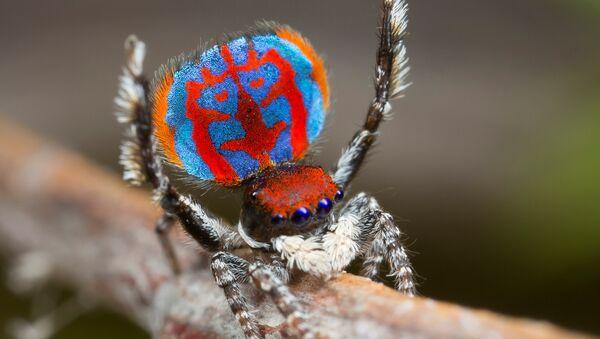 Une araignée - Sputnik France