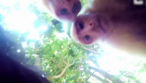 Un singe qui sait faire un selfie - Sputnik France