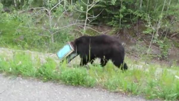 Un ours la tête coincée dans une boîte sauvé en Alaska - Sputnik France