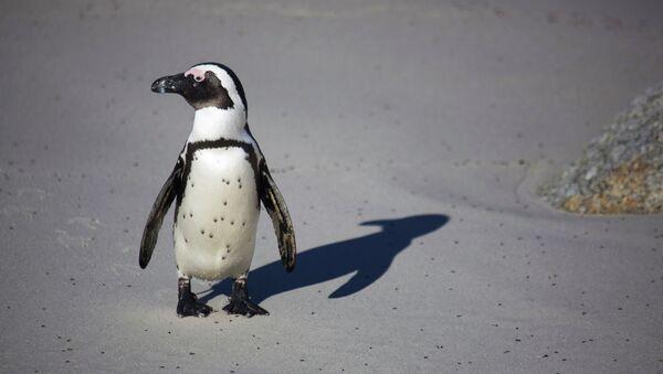 Пингвин - Sputnik France