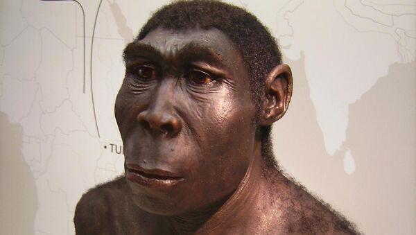 Homo erectus - Sputnik France