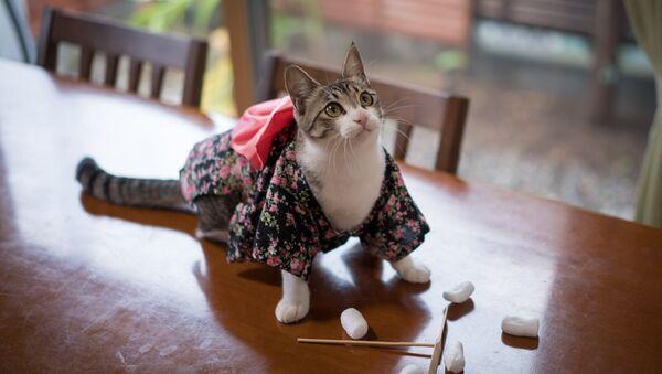 Un chat portant un kimono - Sputnik France