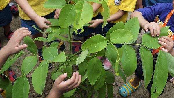 En Inde, près de 50 M d'arbres plantés en un seul jour - Sputnik France