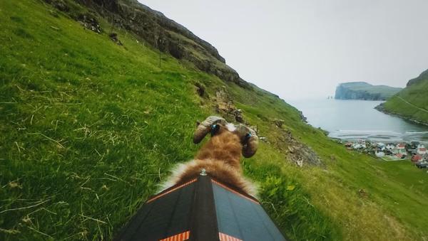Faute de Google Street View, les moutons photographient les îles Féroé - Sputnik France
