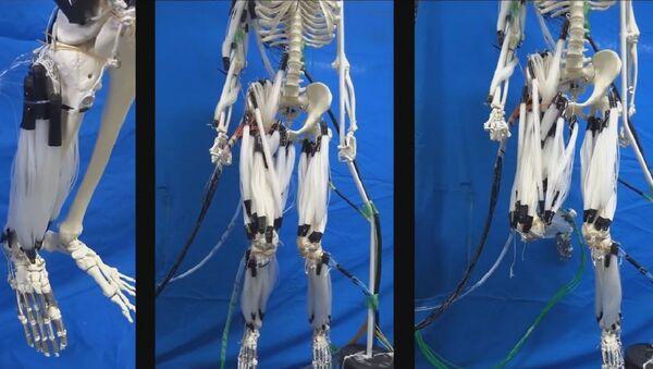 Les scientifiques font bouger un squelette humain avec des muscles artificiels - Sputnik France