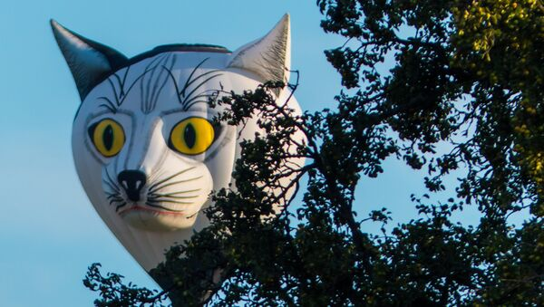 Katze an Apfelbaum - Sputnik France