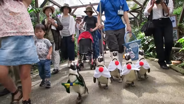 Pingouins déguisés aux couleurs de l'uniforme des sportifs japonais - Sputnik France