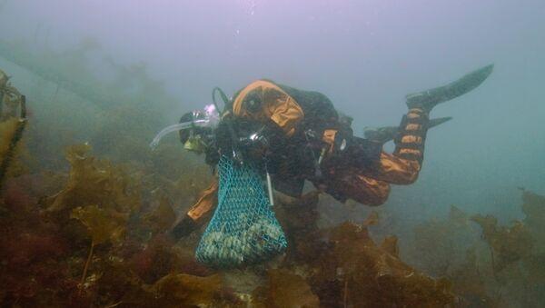 Sous la mer - Sputnik France