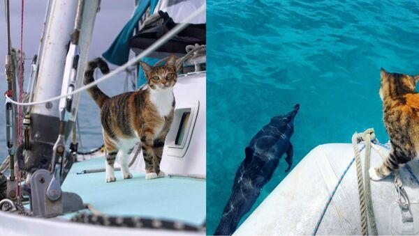 La Journée internationale des chats, avec capitaine Clark et son félin maritime - Sputnik France