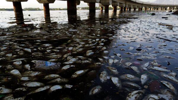 Les poissons morts et des ordures flottent dans la baie polluée  de Guanabara à Rio de Janeiro, Brésil - Sputnik France