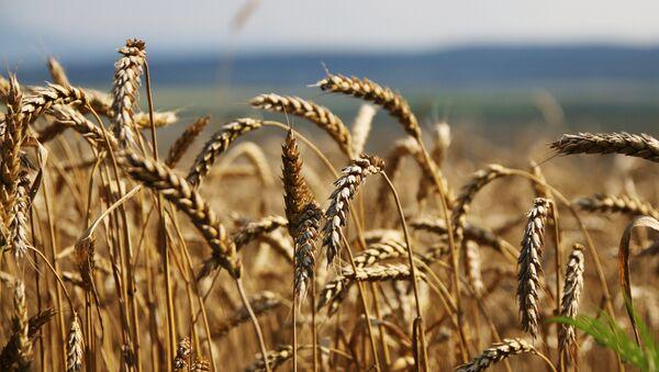 Les sanctions, ou la dolce vita des fermiers russes - Sputnik France