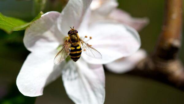 abeilles - Sputnik France