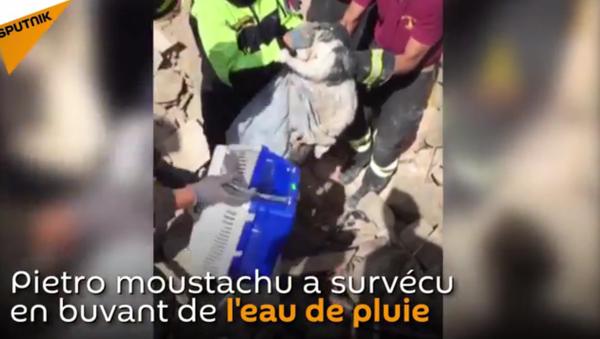 Sauvetage d'un chat 15 jours après le séisme - Sputnik France