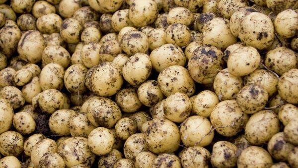 Pommes de terre - Sputnik France