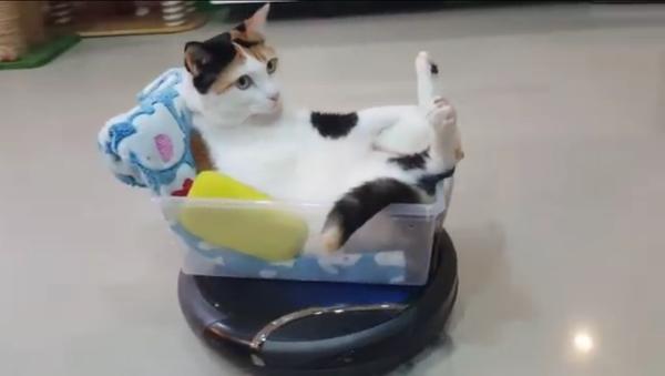 Ce chat qui se promène en robot aspirateur - Sputnik France