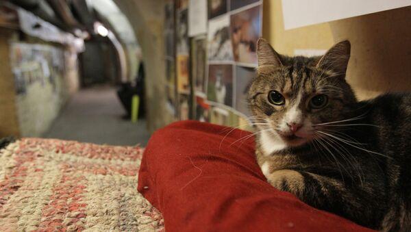 Un chat de l'Ermitage - Sputnik France