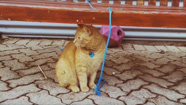 Un chat SDF est devenu policier - Sputnik France