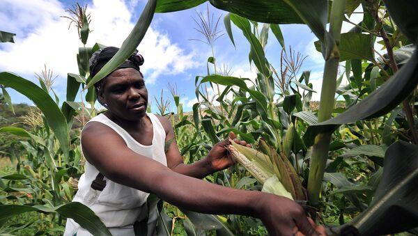 A woman checks maize crop on a small scale farm in Chinhamora, about 50 km north of Harare on Febuary 10, 2011. - Sputnik France