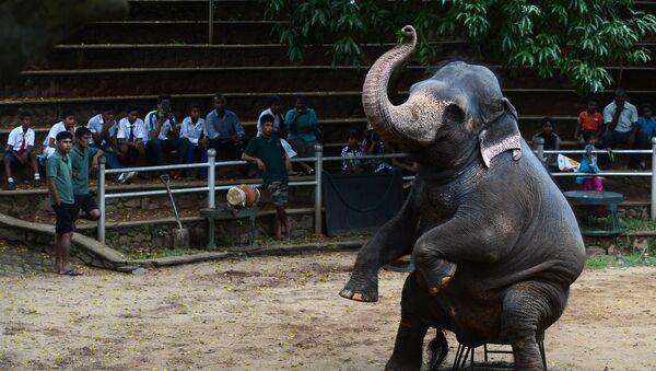 Les capacités intellectuelles des éléphants surprennent les scientifiques - Sputnik France
