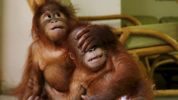 Les singes sont-ils aussi intelligents que les hommes? - Sputnik France