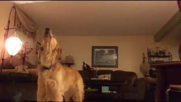 Ce chien qui chante en duo avec une star mondiale de l'opéra - Sputnik France