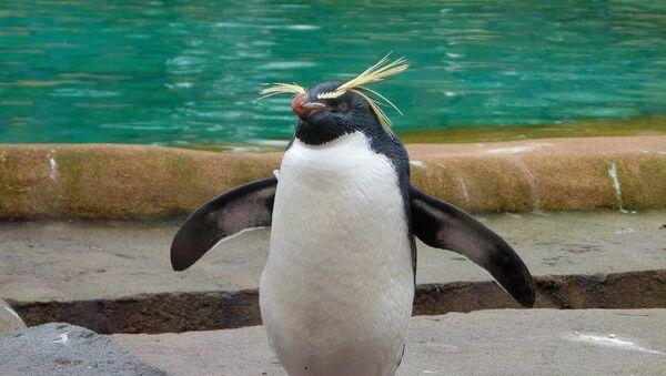 Penguin - Sputnik France