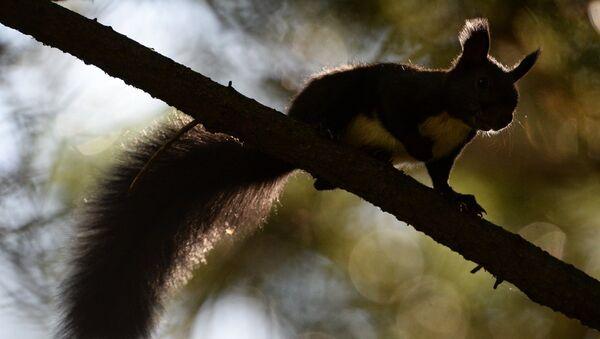 Маньчжурские белки и птицы в парке во Владивостоке - Sputnik France