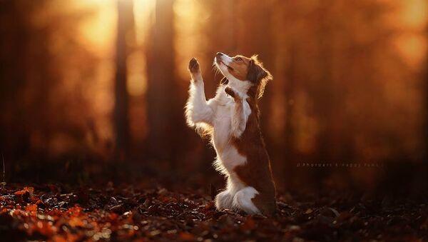 De sublimes portraits de chiens pleins d'expressions - Sputnik France