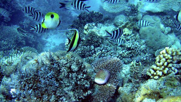 Non, la Grande barrière de corail n'est pas morte! - Sputnik France