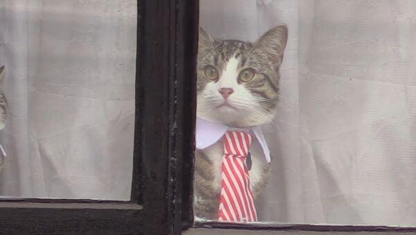 En plein interrogatoire, le chat d'Assange apparaît en cravate - Sputnik France