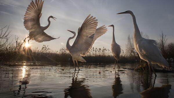 Concours National Geographic: les plus belles photos de la nature - Sputnik France