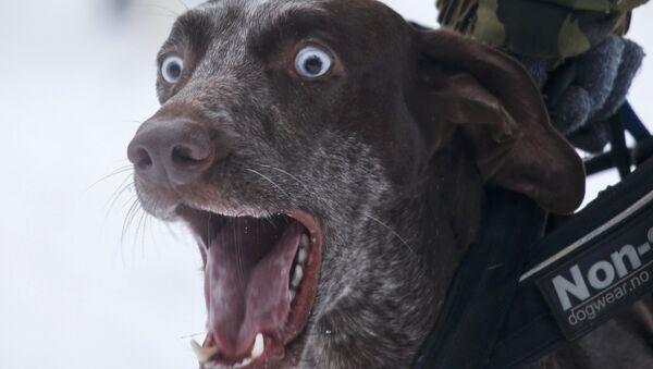 Quand «s'entendre comme chien et chat» n'est pas qu'une expression (vidéo) - Sputnik France