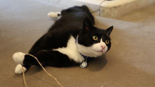 Le chat du Foreign Office britannique accueilli par la garde d'honneur - Sputnik France