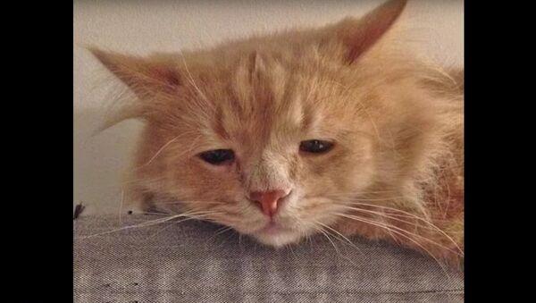 Le chat le plus triste de Russie devient viral sur Internet - Sputnik France