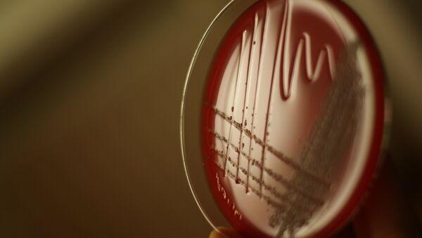 Bacteries - Sputnik France