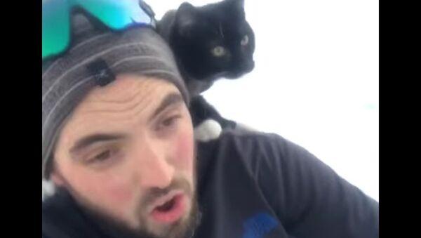 Faire de la luge avec son chat - Sputnik France
