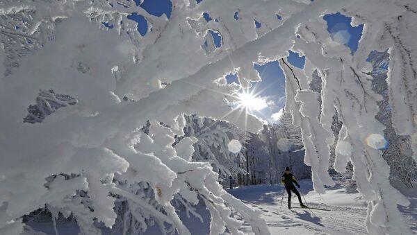 A cross-country skier enjoys a cold and sunny winter's day at the Champ du Feu near Strasbourg, France, January 16, 2017 - Sputnik France
