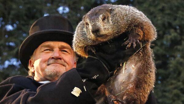 Divination par la marmotte aux États-Unis - Sputnik France