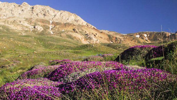 La nature et la vie rurale du nord de l'Iran - Sputnik France