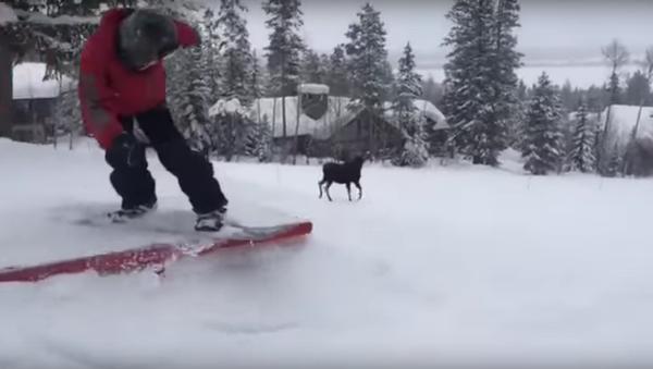 Un élan poursuit des snowboardeurs aux États-Unis - Sputnik France