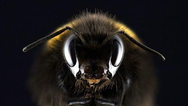un robot-abeille - Sputnik France