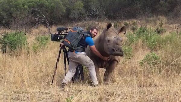Un rhinocéros sauvage demande à un caméraman de lui gratter le ventre - Sputnik France