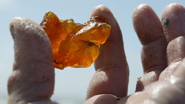 Добыча янтаря в береговой зоне Балтийского моря - Sputnik France