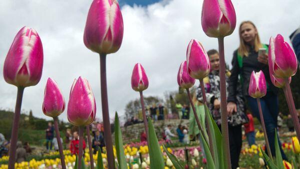 Le défilé des tulipes au Jardin botanique Nikitski - Sputnik France