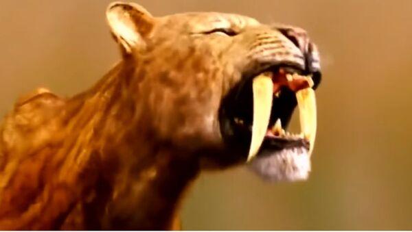 Un crâne de tigre à dents de sabre retrouvé en Allemagne - Sputnik France