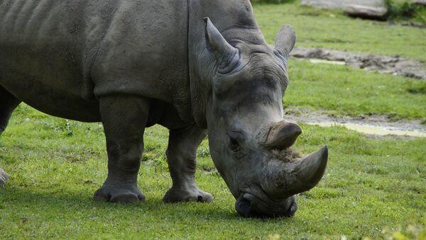 rhinocéro - Sputnik France