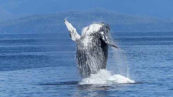 baleine - Sputnik France