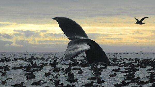 baleines - Sputnik France
