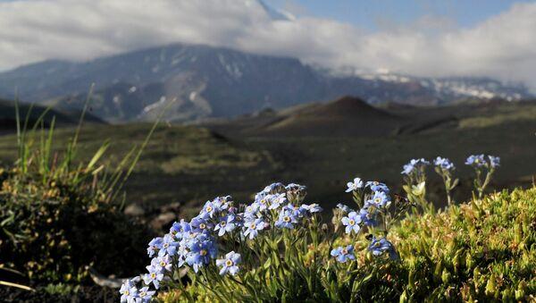 Горные цветы на Камчатке - Sputnik France