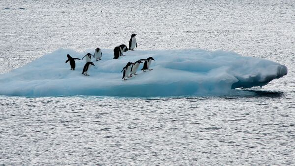 View of penguins on an ice block in front of Brazil's Comandante Ferraz base, in Antarctica on March 10, 2014. - Sputnik France